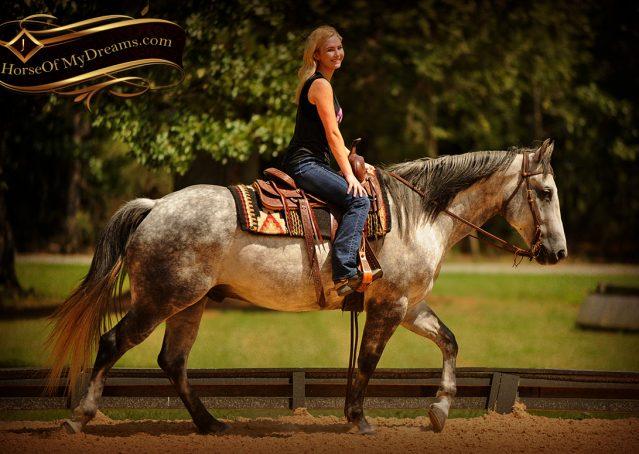 010-Sterling-Gray-Quarter-Horse-Gelding