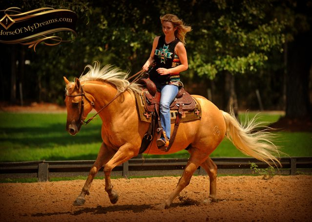 011-Oakley-Palomino-Quarter-Horse-Gelding-For-Sale