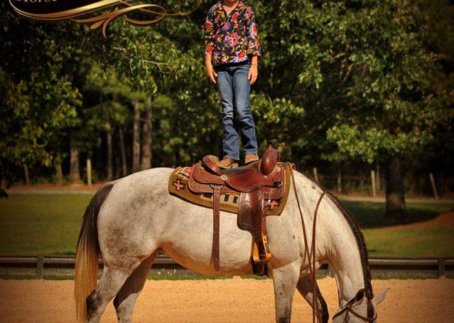012-Gracie-Gray-Quarter-Horse_Mare-For-Sale