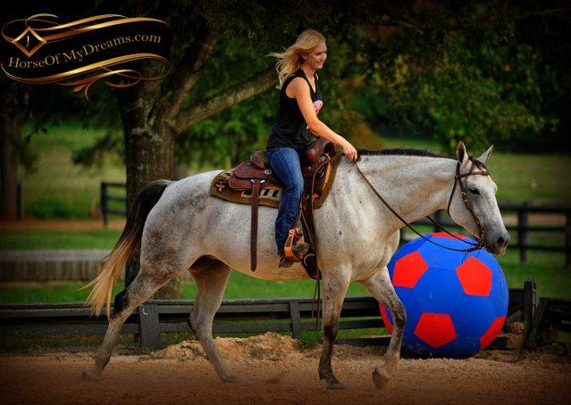 014-Gracie-Gray-Quarter-Horse_Mare-For-Sale