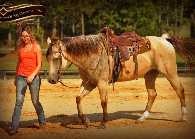 014-Gunsmoke-Buckskin-Quarter-Horse-Gelding