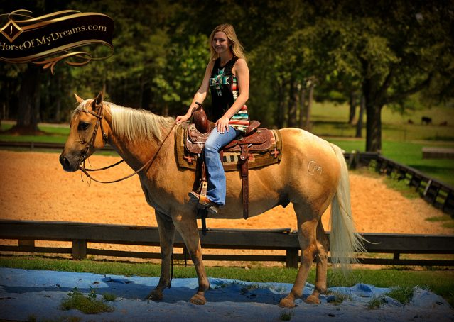 014-Oakley-Palomino-Quarter-Horse-Gelding-For-Sale