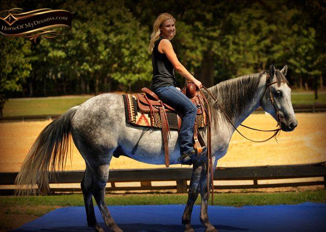 014-Sterling-Gray-Quarter-Horse-Gelding