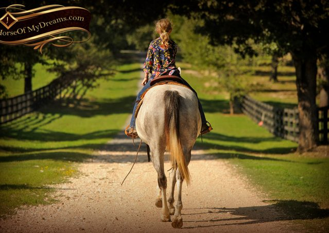 016-Gracie-Gray-Quarter-Horse_Mare-For-Sale