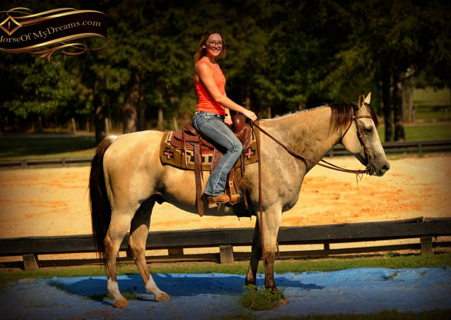 016-Gunsmoke-Buckskin-Quarter-Horse-Gelding