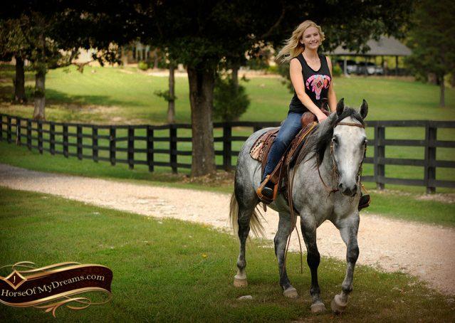 016-Sterling-Gray-Quarter-Horse-Gelding