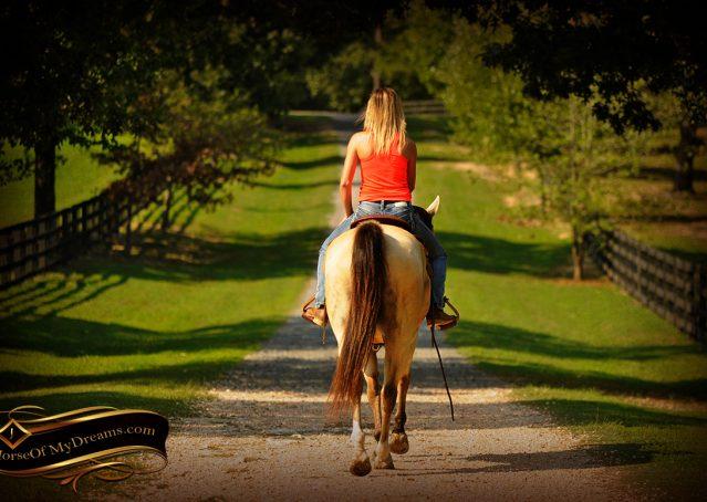017-Gunsmoke-Buckskin-Quarter-Horse-Gelding