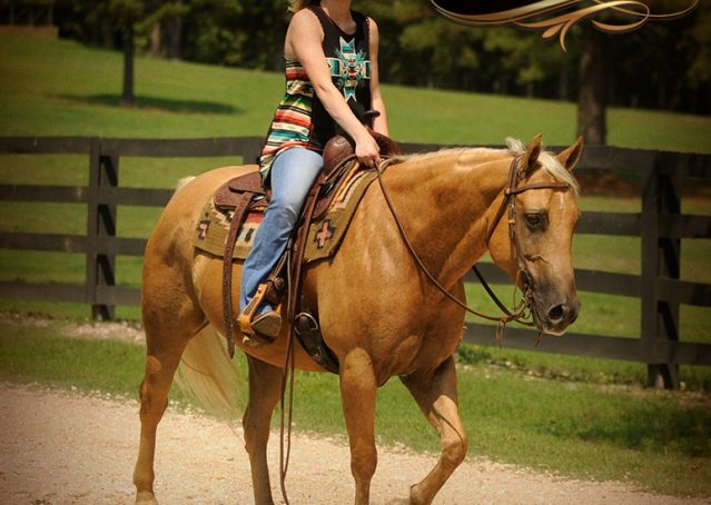 017-Oakley-Palomino-Quarter-Horse-Gelding-For-Sale