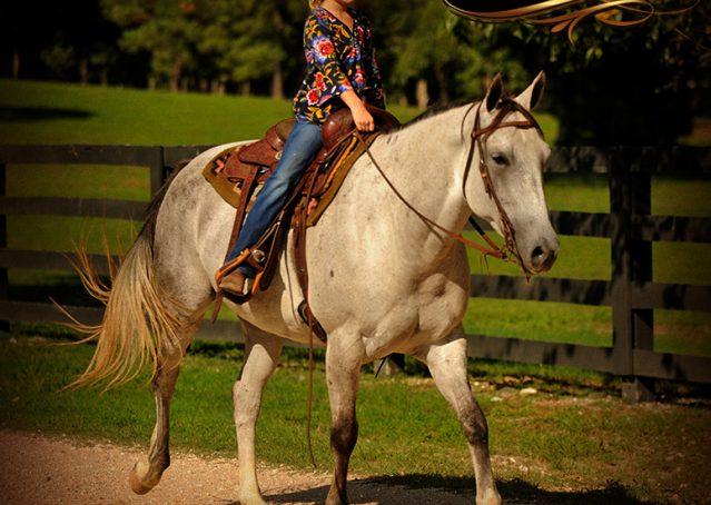 018-Gracie-Gray-Quarter-Horse_Mare-For-Sale