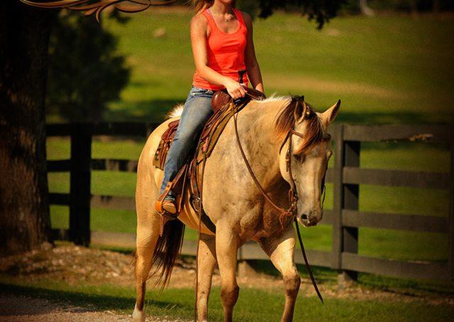 018-Gunsmoke-Buckskin-Quarter-Horse-Gelding