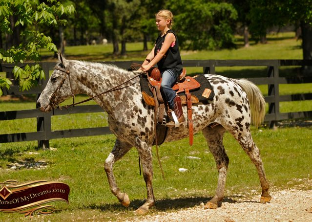 018-Lacota-appaloosa-gelding-for-sale