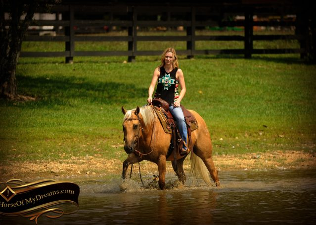 018-Oakley-Palomino-Quarter-Horse-Gelding-For-Sale