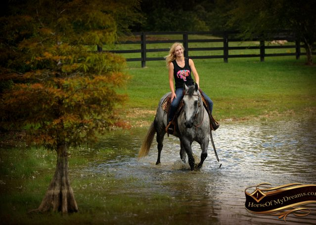 018-Sterling-Gray-Quarter-Horse-Gelding