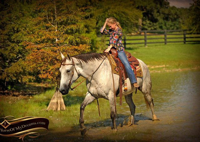 021-Gracie-Gray-Quarter-Horse_Mare-For-Sale