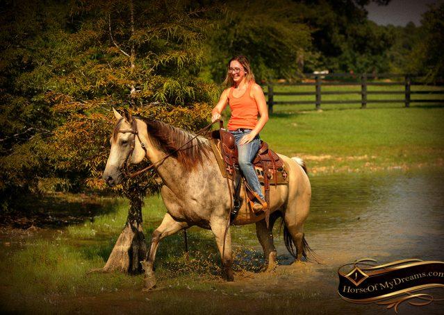 022-Gunsmoke-Buckskin-Quarter-Horse-Gelding