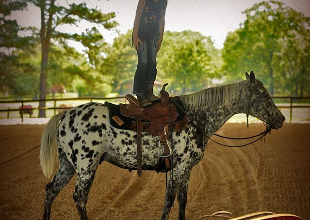 022-Lacota-appaloosa-gelding-for-sale