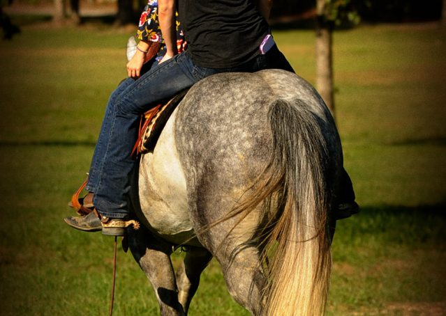 023-Sterling-Gray-Quarter-Horse-Gelding