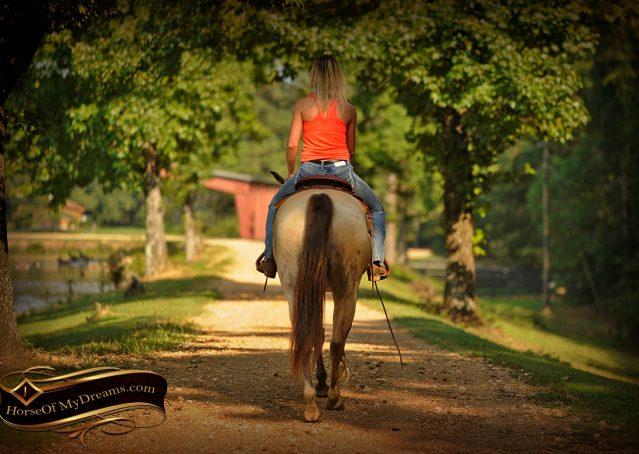 024-Gunsmoke-Buckskin-Quarter-Horse-Gelding