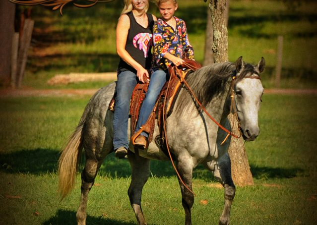 024-Sterling-Gray-Quarter-Horse-Gelding