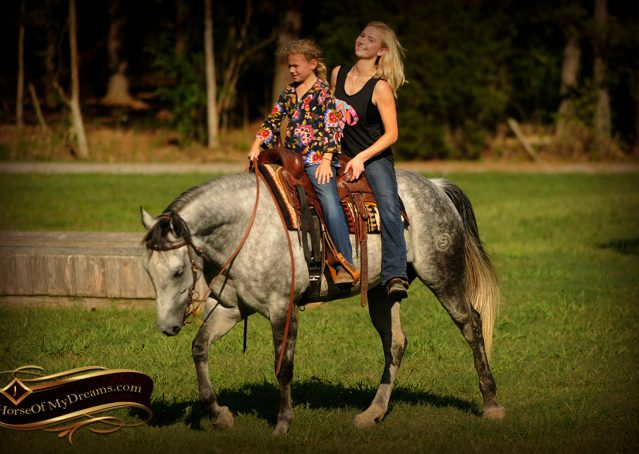 025-Sterling-Gray-Quarter-Horse-Gelding