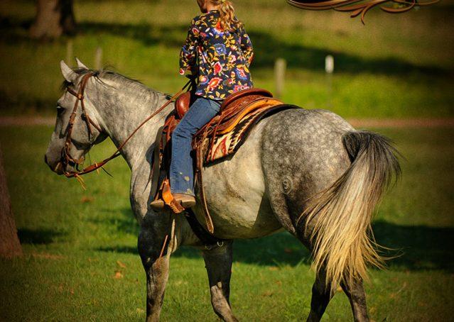 026-Sterling-Gray-Quarter-Horse-Gelding