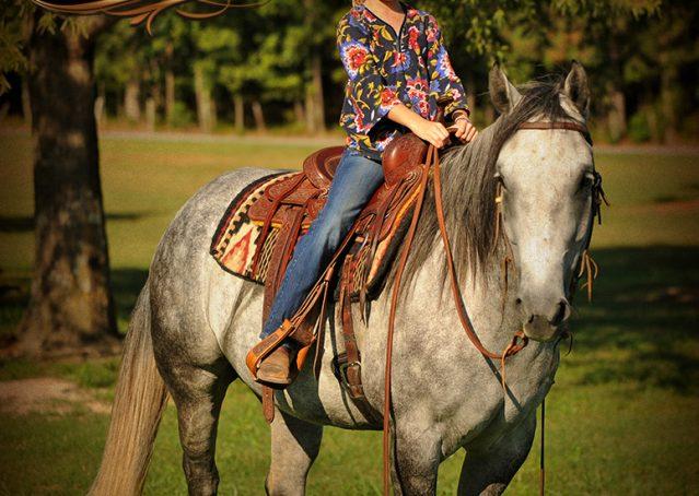 028-Sterling-Gray-Quarter-Horse-Gelding