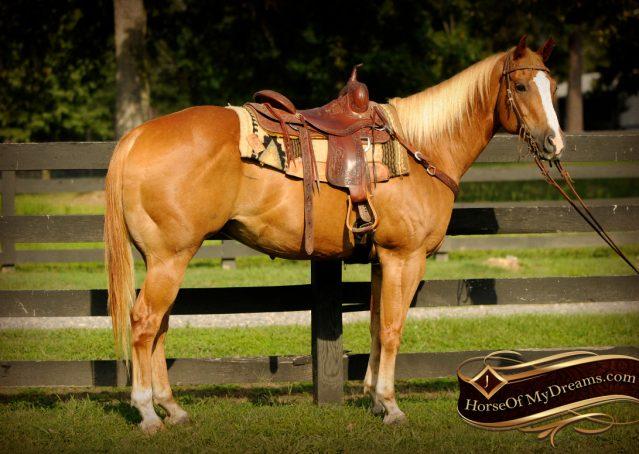 001-Noah-Sorrel-Flaxen-mane-quarter-horse-for-sale