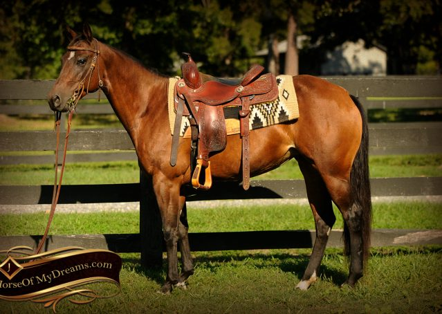 001-Sabrina-AQHA-Sophisticated-Catt-Bay-Mare-For-Sale