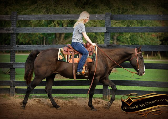 002-Drew-Black-Quarter-Horse-Gelding-For-Sale