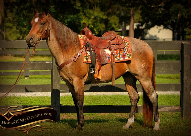 002-Miki-AQHA-Bay-Roan-Gelding-For-Sale