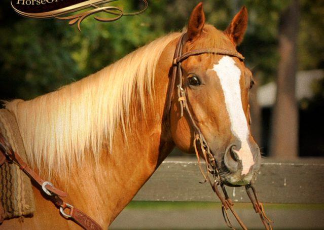 002-Noah-Sorrel-Flaxen-mane-quarter-horse-for-sale
