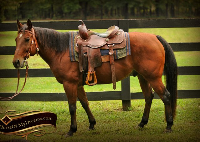 002-Superbowl-Bay-AQHA-Gelding-For-Sale