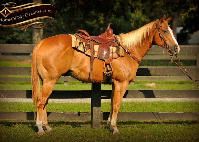 003-Noah-Sorrel-Flaxen-mane-quarter-horse-for-sale