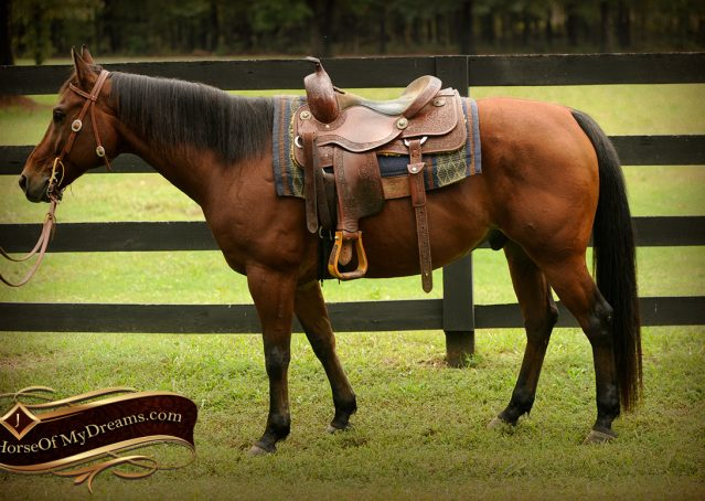 003-Superbowl-Bay-AQHA-Gelding-For-Sale
