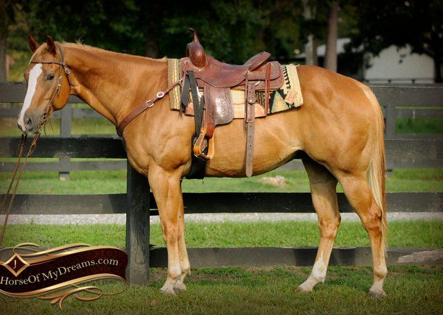 004-Noah-Sorrel-Flaxen-mane-quarter-horse-for-sale