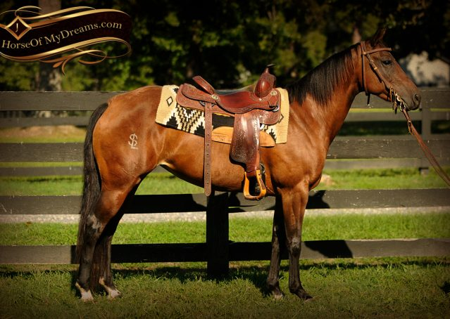 004-Sabrina-AQHA-Sophisticated-Catt-Bay-Mare-For-Sale