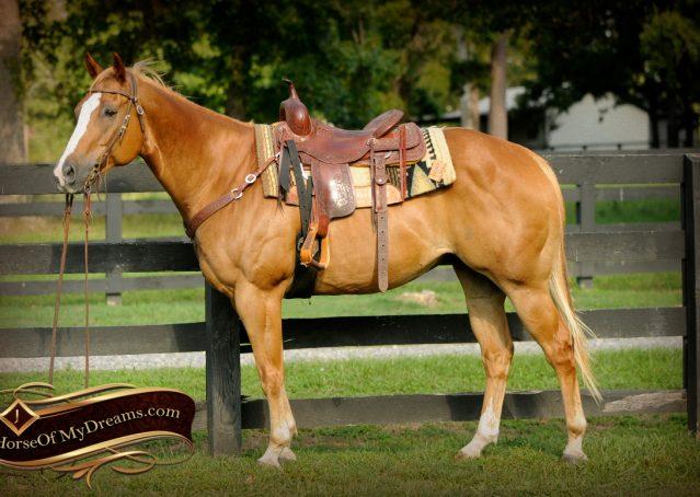 005-Noah-Sorrel-Flaxen-mane-quarter-horse-for-sale