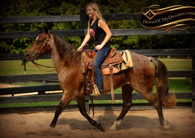 006-Miki-AQHA-Bay-Roan-Gelding-For-Sale