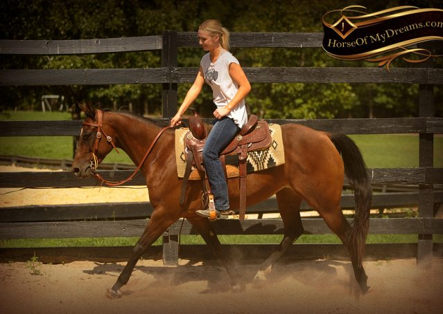 006-Sabrina-AQHA-Sophisticated-Catt-Bay-Mare-For-Sale
