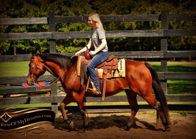 006-Superbowl-Bay-AQHA-Gelding-For-Sale