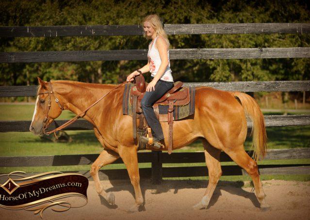 007-Noah-Sorrel-Flaxen-mane-quarter-horse-for-sale