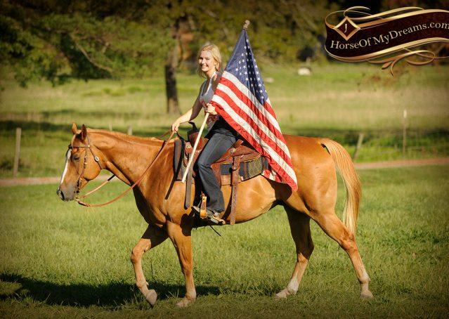 008-Noah-Sorrel-Flaxen-mane-quarter-horse-for-sale