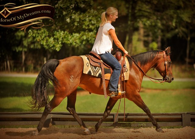 009-Sabrina-AQHA-Sophisticated-Catt-Bay-Mare-For-Sale