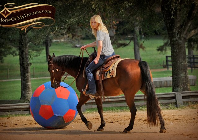 010-Superbowl-Bay-AQHA-Gelding-For-Sale