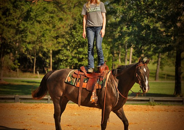 011-Drew-Black-Quarter-Horse-Gelding-For-Sale