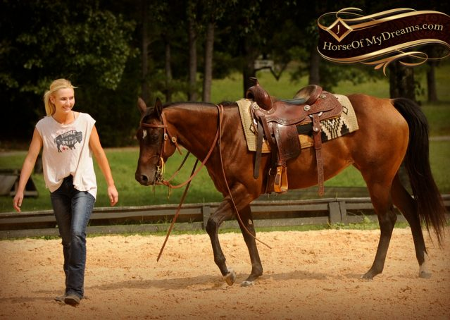 011-Sabrina-AQHA-Sophisticated-Catt-Bay-Mare-For-Sale