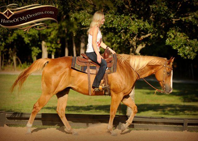 012-Noah-Sorrel-Flaxen-mane-quarter-horse-for-sale