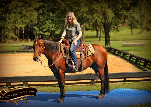 012-Superbowl-Bay-AQHA-Gelding-For-Sale