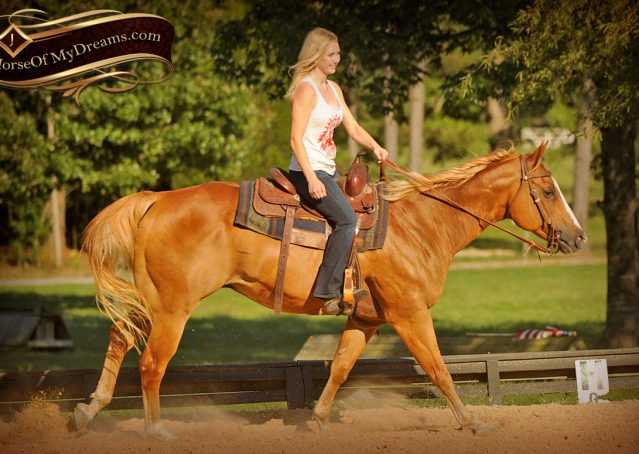 013-Noah-Sorrel-Flaxen-mane-quarter-horse-for-sale