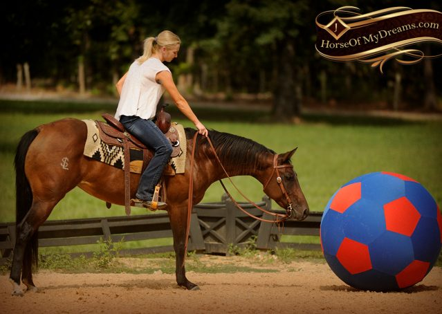 013-Sabrina-AQHA-Sophisticated-Catt-Bay-Mare-For-Sale